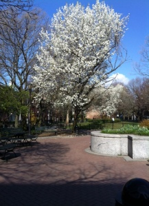 The park in full bloom